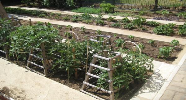 Статья про капельный полив огорода